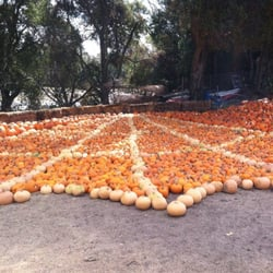 Web ranch pumpkin patch