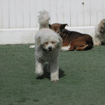 The wags club 36 photos pet boarding pet sitting for Dog boarding los angeles