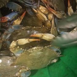 Blue Crabs In Myrtle Beach