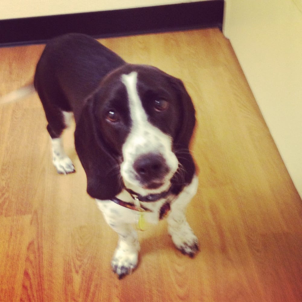 Dog Adoption Events Oklahoma City