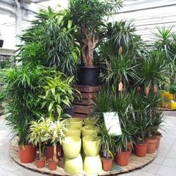 Pflanzen k lle g rtnerei baumschule teltow for Pflanzen laden berlin