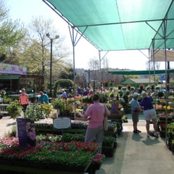 atlantic avenue orchid and garden gardening centres raleigh nc united states reviews