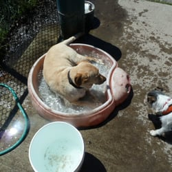Dogs Day Out - Santa Rosa, CA, États-Unis. Winnie cooling off