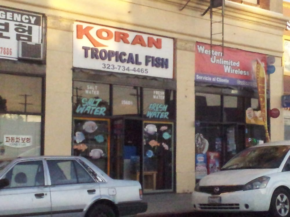 Koran tropical fish local fish stores koreatown los for Tropical fish shop