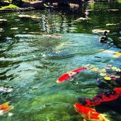 Earl burns miller japanese garden 707 photos venues for Koi fish pond csulb