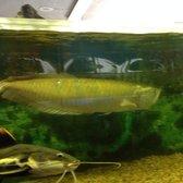 Exotic aquarium 72 photos 66 reviews pet stores for Fishing store sacramento