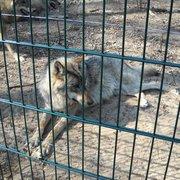Wolfcenter Dörverden, Dörverden, Niedersachsen