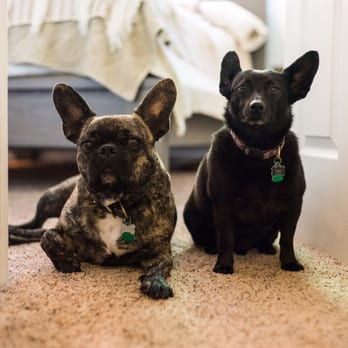 how to stop my french bulldog eating my door