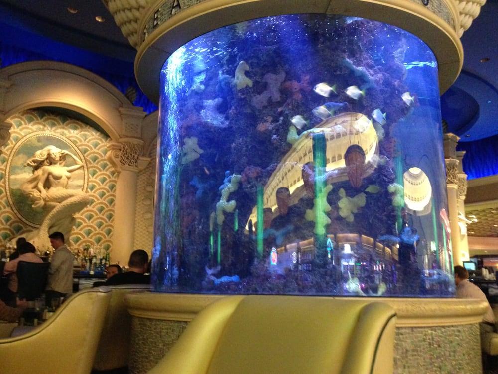 The fish tank at the seahorse lounge yelp for Fish tank las vegas