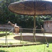 Zoológico de São Paulo, São Paulo - SP
