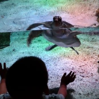 Sea Life Arizona Aquarium 143 Photos Aquariums Tempe