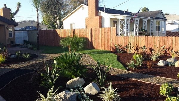 Drought tolerant tropical Yelp