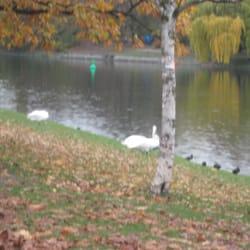 Schwäne am Fluss