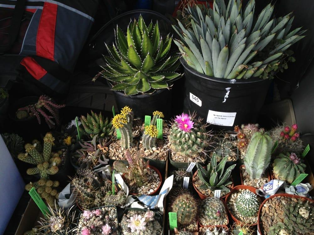 B B Cactus Farm Kwekerijen En Tuinieren Tucson Az