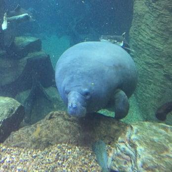 The Dallas World Aquarium Aquariums Dallas Tx United
