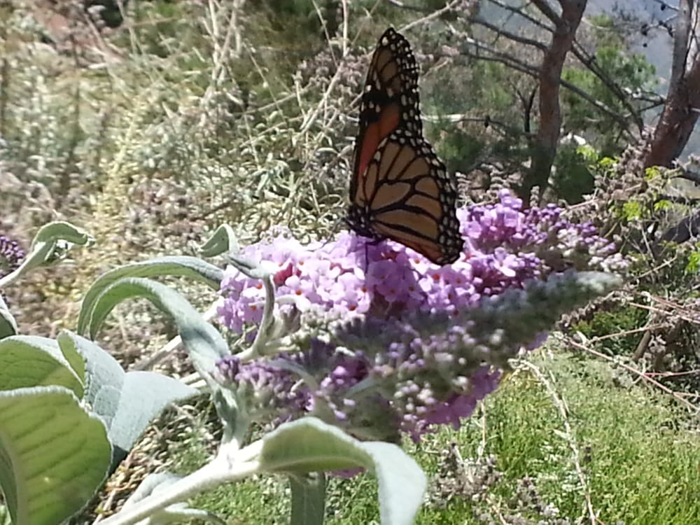 Conejo Valley Botanic Garden Botanical Gardens Thousand Oaks Ca Yelp