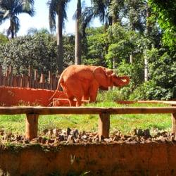 O elefante africano