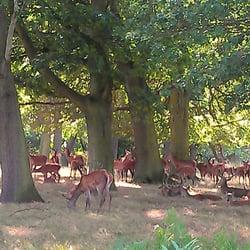 Lots o' deer!
