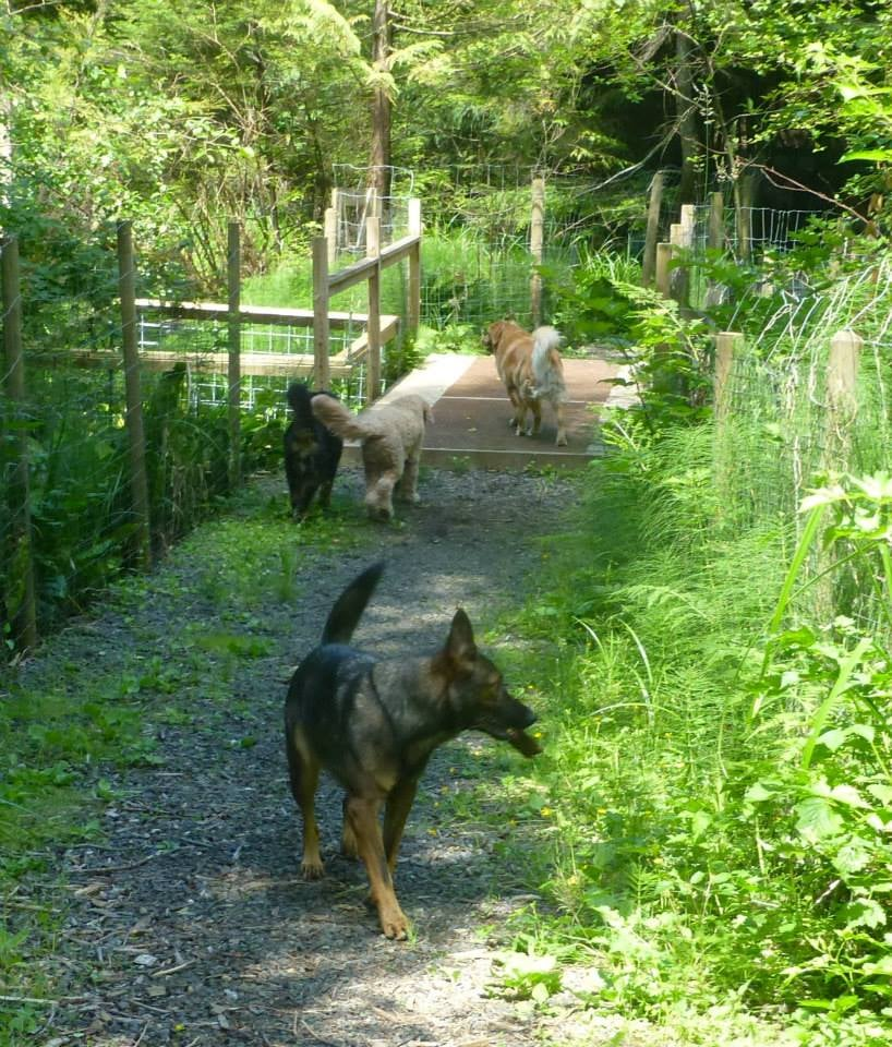 Bowen Island Dog Ranch Reviews