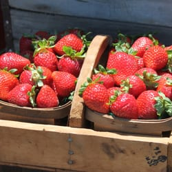 The Original Manassero Farms - Orange County's BERRY Finest. Hand picked and delivered daily. - Irvine, CA, Vereinigte Staaten
