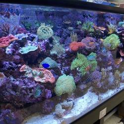 aquarium for sale tampa - Creative Aquariums Of Tampa ...