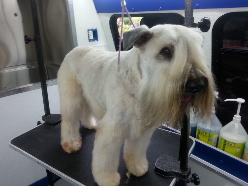 Spot Dog Grooming Los Angeles