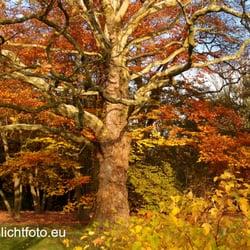 Nicht nur - wie jetzt im Herbst - einer…