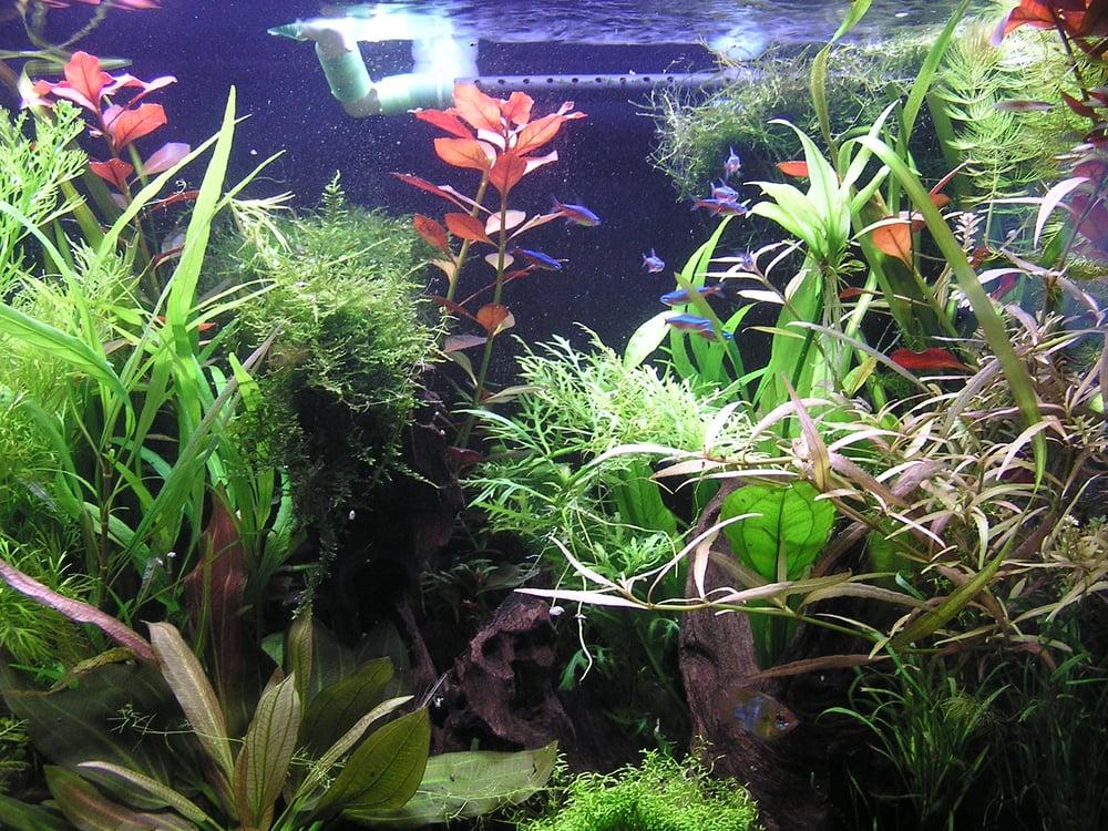 Fish aquarium near me sources of tropical fish stores for Fish shops near me