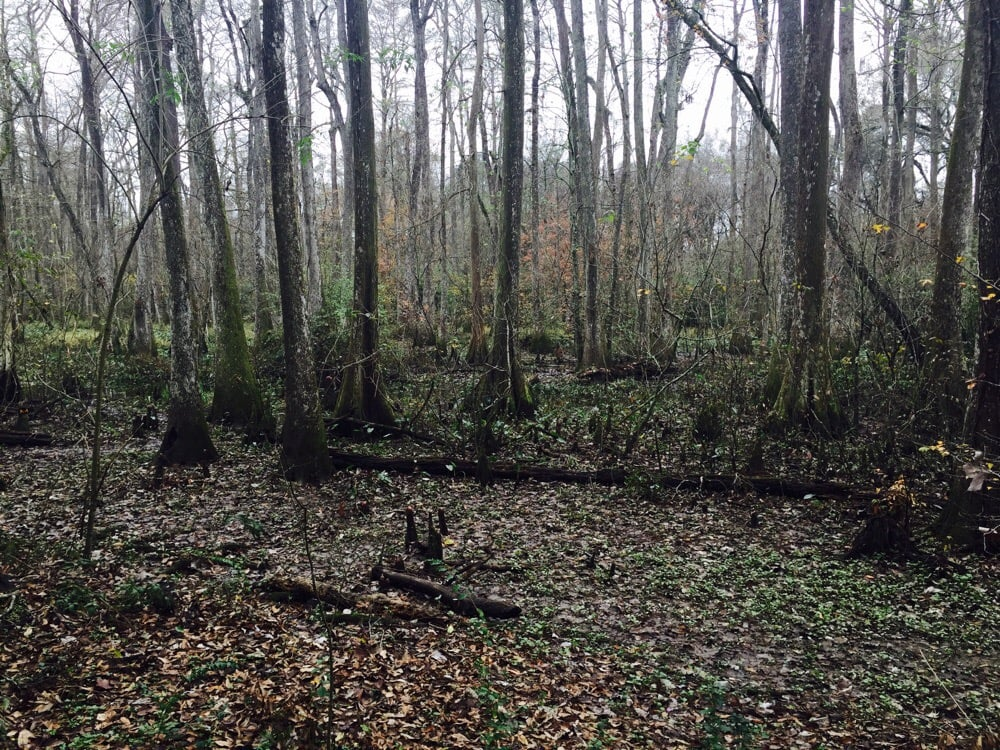 Photos for Bluebonnet Swamp Nature Center | Yelp