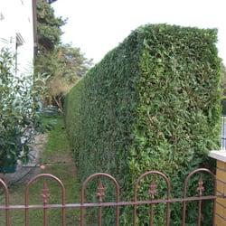 Gartengestaltung und Pflege Pirl, Berlin