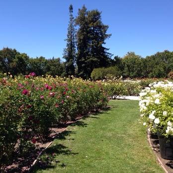 San Jose Municipal Rose Garden Rose Garden San Jose
