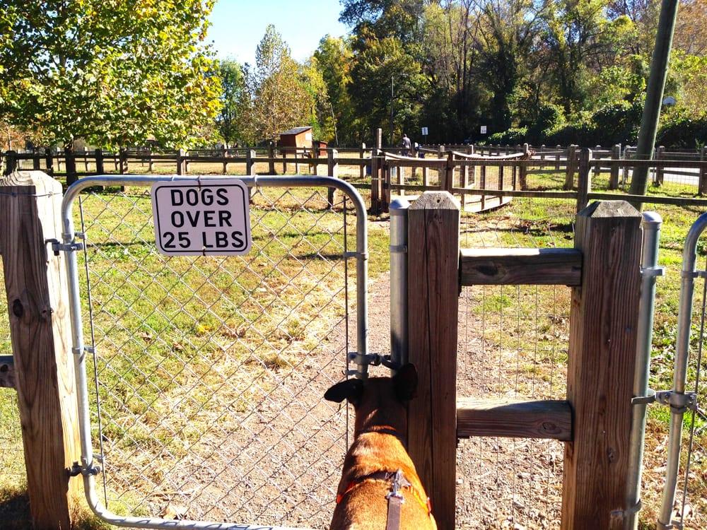 Chop Dog Park Chop Loves The Park | Yelp