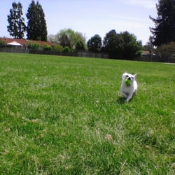Dogs Day Out - Santa Rosa, CA, États-Unis. Allee at the dog park today