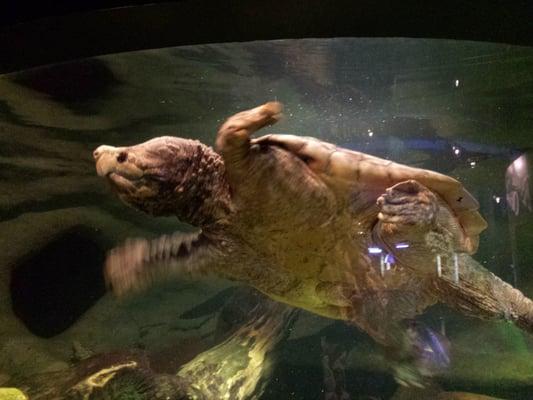 Oklahoma Aquarium - Aquariums - Jenks, OK - Reviews - Photos - Yelp