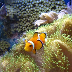 neptune s tropical fish 30 photos pet stores