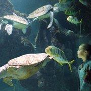 Tortues et enfant(c) Aquarium la…