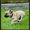 Wunderlich's North Oak Kennels: Dog Grooming