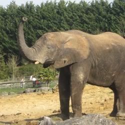Éléphant dans la savane