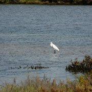 oiseau migrateur, salines de Chiclana,…