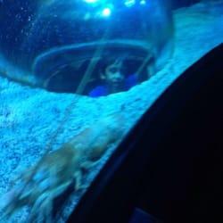 Sea Life Arizona Aquarium Tempe Az United States Yelp