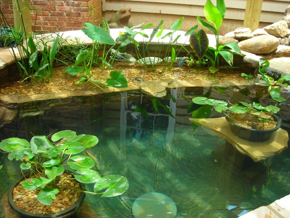 Photos for splendor koi pond yelp for Koi ponds near me