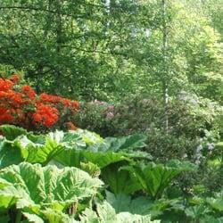 forstbotanischer garten eberswalde 29 fotos botanischer garten eberswalde brandenburg. Black Bedroom Furniture Sets. Home Design Ideas