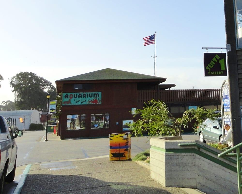 Morro Bay (CA) United States  city images : Morro Bay Aquarium Morro Bay, CA, United States