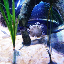 Sea Life Charlotte Concord Aquarium 85 Photos
