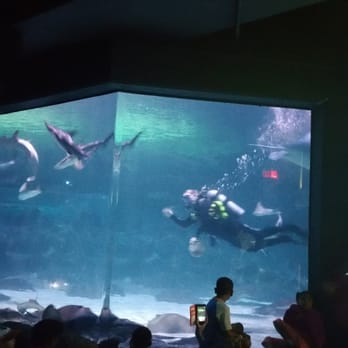 Ripley S Aquarium Myrtle Beach 331 Photos 229 Reviews