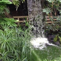 Cascade et jardin tropical