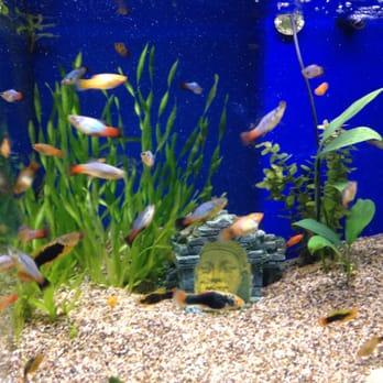 Aquariums West - 12 Photos - Pet Stores - Downtown - Vancouver, BC ...