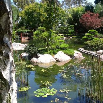 Earl burns miller japanese garden 666 photos venues for Csulb japanese garden koi pond