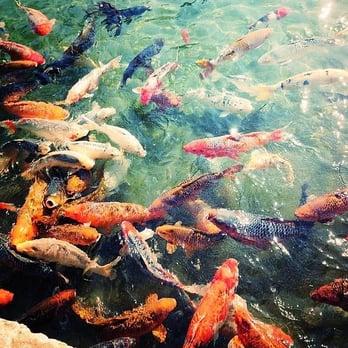 Japanese Tea Gardens San Antonio Tx United States Lots Of Fish
