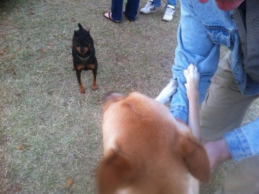 Memphis Dog Park Avery